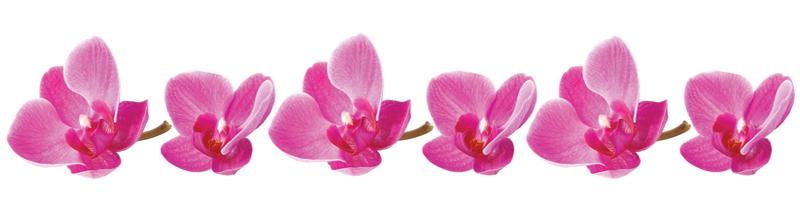 Orhidee_panoraam_veeb